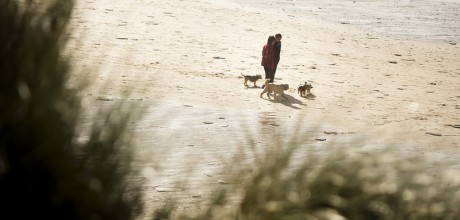 blog, cornwall blog, days out with dogs, dog friendly beaches cornwall, things to do with dogs cornwall