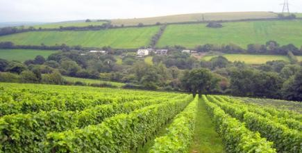 Camel Valley, Vinyard, things to do in Cornwall