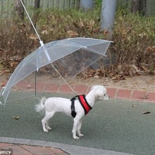 A dog under an umbrella surviving weather in Cornwall